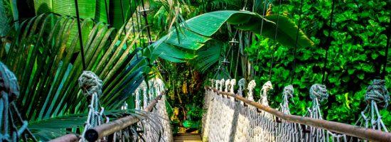 pont-palm