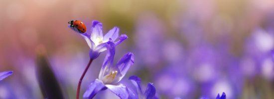 flower-1331744_1280