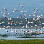 flamants_roses-180x175