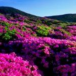 fleurs_jeju-179x167