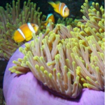 Chagos-250x250