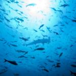 ocean_-_Photo_Jeff_Litton-300x208