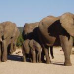 Elephants_Photo_Alicia_Wirz-300x186