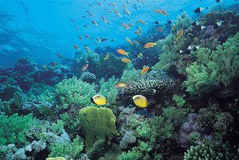poissons_et_coraux_Nausicaa-345x231