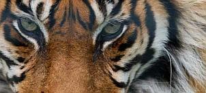 giesbers_naturepl.com-302x137