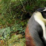 Liste rouge de l'UICN
