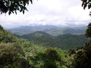 Ebo forêt