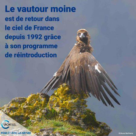 bonne-nouvelle-vautour